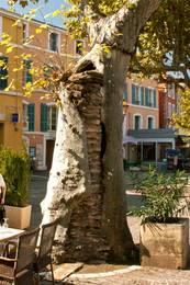 Ein Baum in der Altstadt von Apt mit den Überresten einer Ruine im Stamm