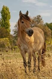 Ein Pferd auf einer Wiese am Stadtrand von Apt