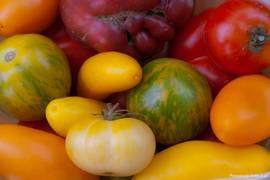 Bunte Tomaten frisch aus der Provence
