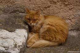 Dösende Katze in der Gassen von Callian