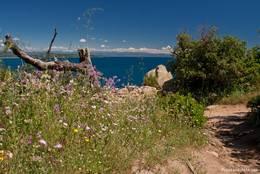 Viele blühende Blumen am Wegrand zur Spitze des Cap Camarat