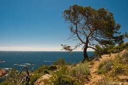 Das Cap Camarat