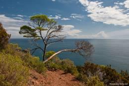 Zwei markante Bäume auf dem Weg rund um das Cap Dramont