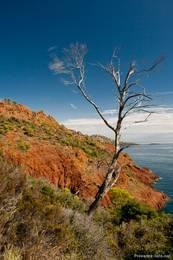 Ein abgestorbener Baum an der Küste des Cap Dramont
