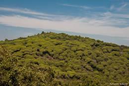 Bewaldeter Hügel im Naturschutzgebiet des Cap Lardier