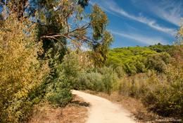 Zweige eines Eucalyptus-Baums hängen über den Forstweg