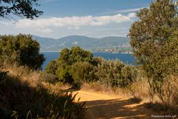 Der breitere Forstweg zum Cap Lardier als Alternative zum Küstenwanderweg