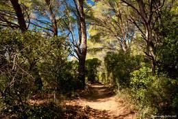 Kurz vor dem Cap Lardier geht es noch durch ein kleines Waldstück
