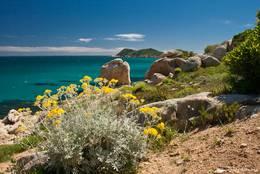 Blühende Blumen zwischen den Felsen auf dem Weg entlang der Küste zum Cap Taillat