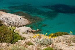 Blumen und Pflanzen wachsen zwischen den Felsen entlang der Küste