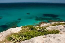 Katusfeigen an der wunderschönen Küste nahe dem Cap Taillat