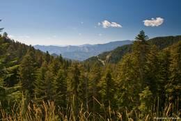 Der Ausblick vom Col de Turini ist leider etwas durch Bäume eingeschränkt