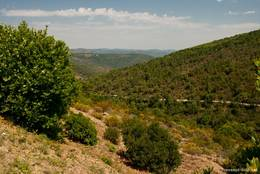 Ausblick vom Col du Canadel in die Berge des Maurenmassivs, zwischen den Bäumen ist die nördliche Straße zum Pass zu erkennen
