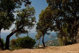 Blick durch die Bäume an der Passhöhe des Col du Canadel auf das Mittelmeer
