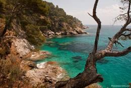 In den felsigen Buchten vor der Küste findet man typisch für die Côte d'Azur kristallklares azurblaues Wasser
