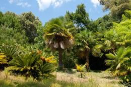 Palmen und andere mediterrane Pflanzen im Garten