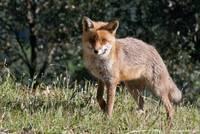 Tierwelt der Provence