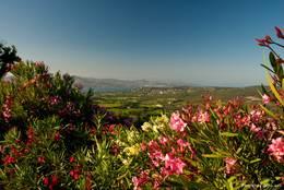 Ausblick von Gassin über blühenden Oleander auf die Bucht von Saint-Tropez