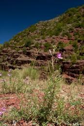 Vereinzelte Blumen und Büsche, diese grünen Farbtupfer bringen das Rot des Gesteins noch besser zur Geltung