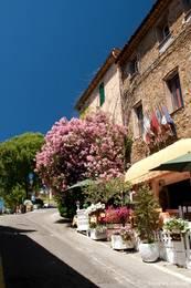 Am Straßenrand blüht ein riesiger Oleander
