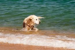 Badender Hund an der Côte d'Azur