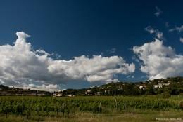 Weinanbau in La-Croix-Valmer