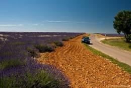Straße durch die Lavendelfelder auf dem Plateau de Valensole