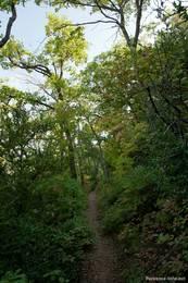 Hier führt der schmale Weg durch einen kleinen Wald hinab von den Felsen
