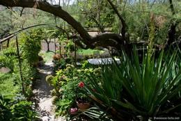 Blick in einen Garten am Ortsrand von Lourmarin