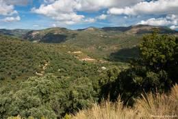 Bewaldete Hügel im Maurenmassiv unweit der Côte d'Azur