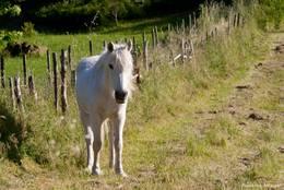 Ein Pferd auf einer Wiese im Herzen des Maurenmassivs