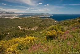 Blühende Büsche und Pflanzen in den Bergen des Cap Sicié