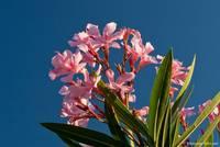 Blumen und Pflanzen der Provence