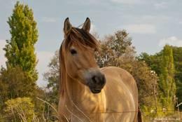 Ein Pferd auf einer Wiese in der Provence