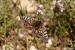 Ein Schmetterling auf einer Wiese am Ortsrand