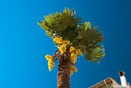 Eine Palme in Seillans