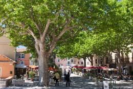 Große Platanen im Dorfzentrum von Tourtour, darunter zahlreiche Cafés und Restaurants