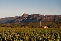 Weinbau im Tal des Flusses Endre zwischen Le Muy und den Gorges de Pennafort im Département Var