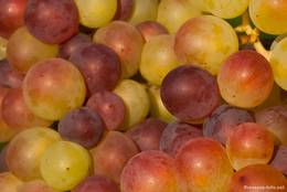 Weintrauben noch vor der Reife